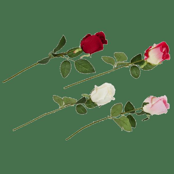 Geschlossene Rose